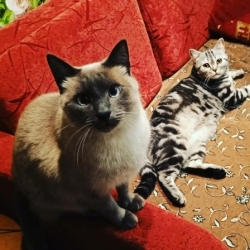 Боня и Феня